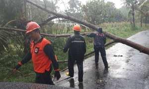 BPBD Sleman melakukan penanganan di sejumlah titik pohon tumbang di Sleman, Sabtu (11/10/2017). (Foto istimewa/Dokumen)