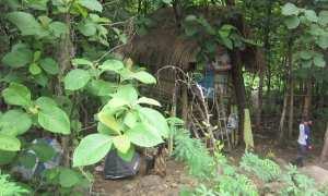 """""""Rumah pohon"""" yang dihuni keluarga Budiyanto di Plesungan, Gondangrejo, Karanganyar, Rabu (13/12/2017). (Ponco Suseno/JIBI/Solopos)"""