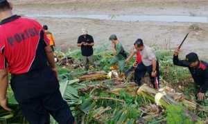 Polisi bersama berbagai pihak membersihkan tanggul Sungai Wulan di Kecamatan Undaan, Kabupaten Kudus, Jateng, Minggu (3/12/2017). (Tribratanews.jateng.polri.go.id)