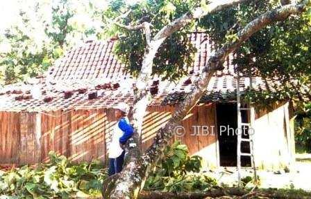 Rumah milik warga tertimpa pohon yang tumbang dihantam puting beliung di Dukuh Pakel, Desa Gebang, Sukodono, Sragen, Kamis (4/1/2018) sore. (Istimewa/Joko Ari Atmojo/BPBD Sragen)