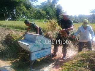 Anggota Kodim 0735/Solo bersama petani menggelar panen padi di Kampung Tawangsari, Mojosongo, Jebres, Minggu (7/1/2018). (Muhammad Ismail/JIBI/SOLOPOS)