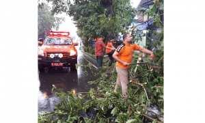Petugas TRC BPBD Solo mengevakuasi pohon tumbang di Jl. Ahmad Yani Solo, Rabu (10/1/2018). (Istimewa/TRC BPBD Solo)