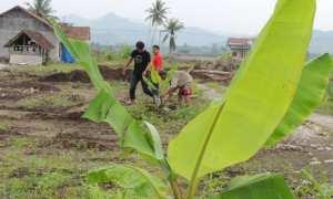 Warga dibantu aktivis dan sukarelawan sedang menanam pohon di atas lahan NYIA yang sudah dibersihkan. Kegiatan ini berlangsung selama dua hari, Sabtu (13/1/2018) dan Minggu (14/1/2018). (Uli Febriarni/JIBI/Harian Jogja)