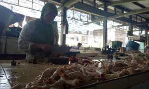 Pedagang di Pasar Demangan Jogja mengaku menjual daging ayam hingga seharga Rp35.000 per kilogram, Senin (1/1/2018). (Harian Jogja/Rima Sekarani I.N)