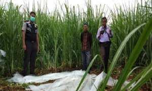 Polisi menangani penemuan mayat yang telah membusuk di kebun tebu Kabupaten Batang, Kamis (4/1/2018). (JIBI/Solopos/Antara/Kutnadi)