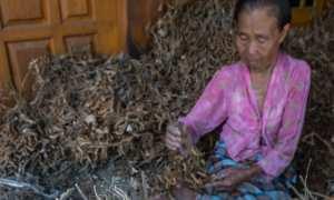 Petani menyortir kedelai seusai dijemur di rumahnya, Desa Jragung, Karangawen, Demak, Jateng, Minggu (31/12/2017). (JIBI/Solopos/Antara/Aji Styawan)