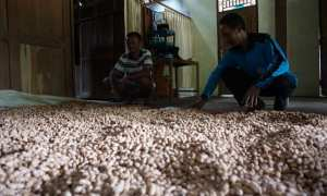 Hasil pertanian kacang di Pringombo, Girisubo,yang berhasil diselamatkan dari hama tikus, Selasa (16/1/2018). (Harian Jogja/Herlambang Jati Kusumo)
