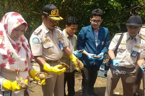 Kegiatan pelepasan kepiting di Kawasan Mangrove Baros, Rabu (3/01/2018). (Salsabila Annisa Azmi/JIBI/Harian Jogja)