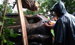 Mobil Avanza hitam bernomor polisi AB 1265 FB tertimpa pohon waru saat melintas di ruas jalan Pleret di Dusun Kedaton, Desa Pleret, Kecamatan Pleret, Senin (22/1/2018) sore. (Rheisnayu Cyntara/JIBI/Harian Jogja)