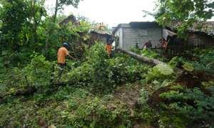 Pohon tumbang menimpa rumah di Wukirsari, Baleharjo, Wonosari, Sabtu (20/1/2018). (Herlambang Jati Kusumo/JIBI/Harian Jogja)