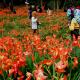 Tiket Pesawat ke Jogja Semakin Murah, Jangan Lupa Berkunjung ke Gunung Kidul