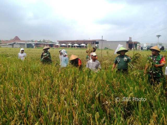 Dandim 0735/ Surakarta Letkol Inf Ali Akhwan, (dua dari kanan) memanen padi jenis Ciherang jumbo di kawasan perum Indah Kampung Karangasem RW 007, Karangasem, Laweyan, Rabu ( 7/2/2018). (Muhammad Ismail/JIBI/SOLOPOS)