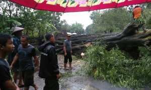 Tim gabungan bersama warga berusaha menyingkirkan batang pohon asam yang tumbang di Dukuh Gandu RT 002 Desa Nganti, Gemolong, Kamis (8/2/2018) sekitar pukul 14.20 WIB. (Istimewa/Kasi Trantib Gemolong/Sigit Wardoyo)