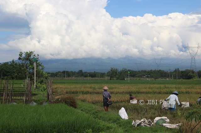 Petani memanen padi di sawah Desa Gledeg, Kecamatan Karanganom, Klaten, Jumat (23/2/2018). (Cahyadi Kurniawan/JIBI/Solopos)