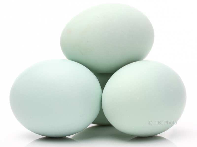 Ilustrasi telur bebek. (IST/Media Counter Culture Ssa)