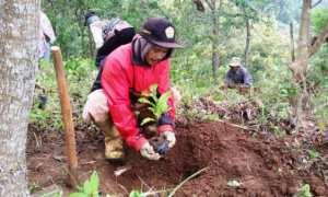 Salah seorang warga Kampung sedang menanam bibit kopi robusta di kawasan Gunung Gambar, Desa Kampung, Kecamatan Ngawen. Foto diambil beberpa waktu lalu. (Istimewa)