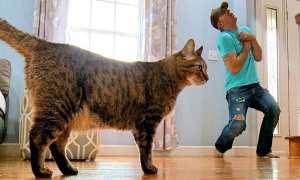 Percobaan pura-pura mati di depan kucing (Boredpanda)