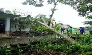 Petugas BPBD Sleman dibantu warga mengevakuasi pohon tumbang di Dusun Nglaban Sinduharjo, Senin (12/2/2018) petang. (Ist. Dok BPBD Sleman)