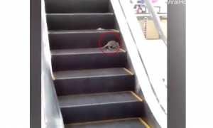 Seekor tikus menakuti pengunjung mal di Filipina (Instagram)