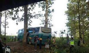 Bus Garuda masuk di jalur sempit Hutan Blora (Facebook/Edhi Prayitno Ige)