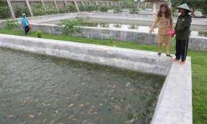 Petugas dari Dinas Pertanian dan Ketahanan Pangan Kota Madiun memberikan makanan di kolam ikan Balai Benih Ikan Kota Madiun, Senin (5/2/2018). (Istimewa/Pemkot Madiun)
