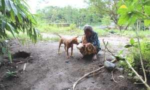 Sugiyem memberi makan anjing kesayangannya bernama Itut di sekitar rumahnya di tepi Kali Woro, Dukuh Nglinggang, Desa Borangan, Manisrenggo, Klaten, Jumat (23/2/2018). (Taufiq Sidik Prakoso/JIBI/Solopos)