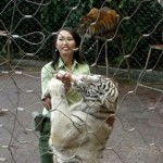 Harimau terkam bocah di Taman Safari
