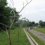 Baru tiga bulan ditanam, pepohonan banyak mati