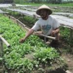 APTI harap petani tembakau tak trauma cuaca