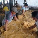 INVESTASI INDONESIA : Pabrik Sagu Terbesar di Indonesia Resmi Beroperasi di Kais Papua Barat