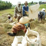 PILPRES 2014 : Relawan Jokowi di Bantul Sumbang Hasil Bumi untuk Takjil