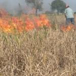 Jengkel, Petani Jantiharjo bakar padi