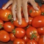 Tomat matang bermanfaat perangi kolesterol