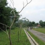 200 Makam kampung dijadikan hutan kota