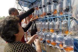 Jumlah pedagang pasar ikan hias membengkak