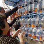 PERIKANAN JOGJA : Manfish Dikembangan, Seperti Ini Caranya
