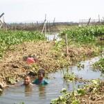 Pengerukan rawa Jombor molor, petani  rugi puluhan juta