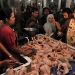 HARGA KEBUTUHAN POKOK : Daging Ayam Turun