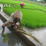 18 Desa di Sleman Terima Masing-masing Rp178 Juta untuk Perbaikan Irigasi