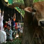 Dinas Pertanian bakal latih 500 penyembelih hewan kurban