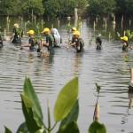 ASTRA MOTOR Tanam 12.000 Mangrove di Pantai Semarang