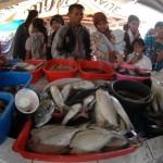 Tangkapan ikan nelayan DIY menurun drastis