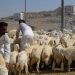 Pasar Kaqiyah, tempat berburu hewan kurban di Mekah