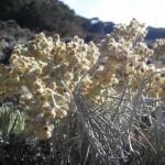 Viral Pendaki Nekat Petik Edelweis di Gunung Lawu Karanganyar, Alasannya Bikin Kesal