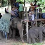 Nasib pegawai kebun binatang Jurug tergantung investor