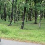 Hutan kota Sragen jadi percontohan Jateng