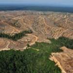 Penggundulan hutan di Indonesia tertinggi ke-2 dunia