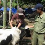 5 Tim dibentuk awasi penyembelihan hewan kurban