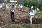 2700 Pohon ditanam di Cepogo