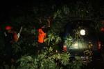 POHON TUMBANG: Pohon Trembesi Tumbang Timpa Mobil Keluarga
